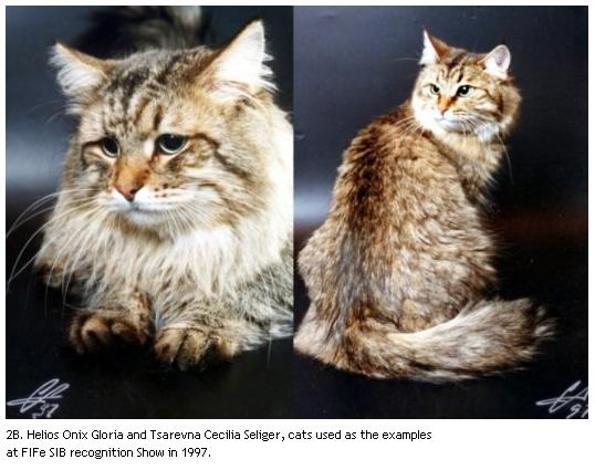 2B. Helios Onix Gloria and Tsarevna Cecilia Seliger, cats used as the examples at FIFe SIB recognition Show in 1997.